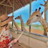 【タイ バンコク】200頭のキリンに囲まれて写真が撮れる『マリンパーク』ゾウにも乗れる!トラやオラウータンと写真が撮れるここは動物王国!!