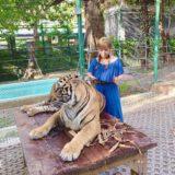 【タイ プーケット】トラと一緒に写真が撮れるTiger Kingdomを体験!!